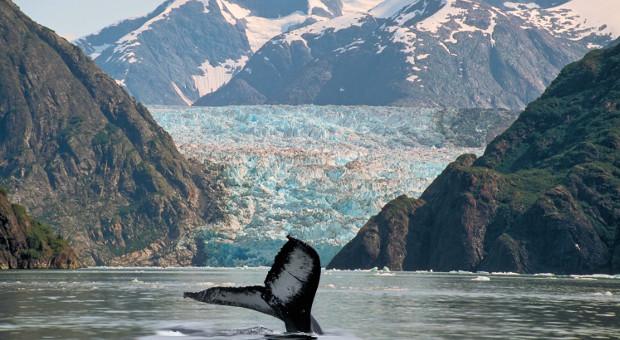 Whale fin and glacier