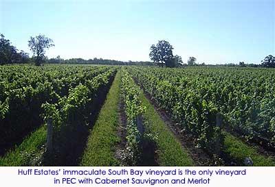 PEC vineyard