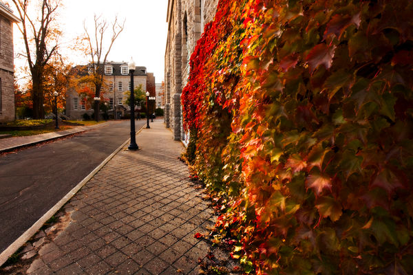 Campus optics in the fall.