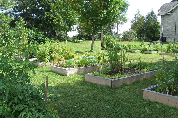 The Queen's community garden in full bloom. (Photo: Queen's Sustainability)