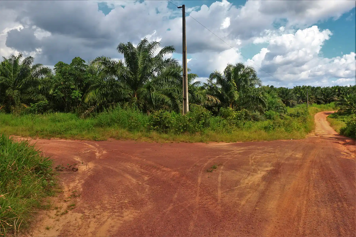 A fork in the road in the Amazon area of Brazil