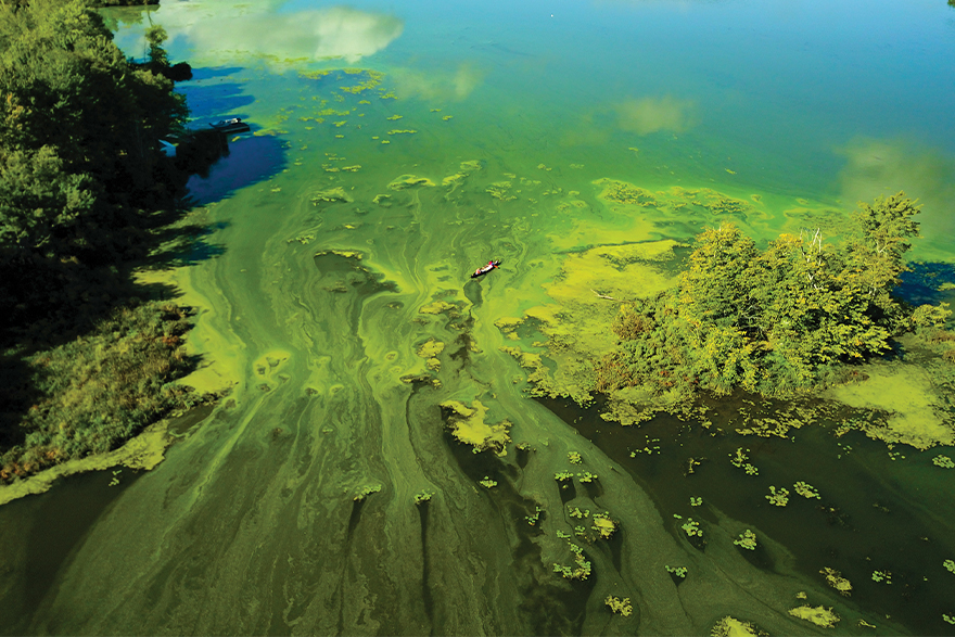 Aerial view of a lake that is green with algae. Off center, a small canoe with two people paddling can be seen.