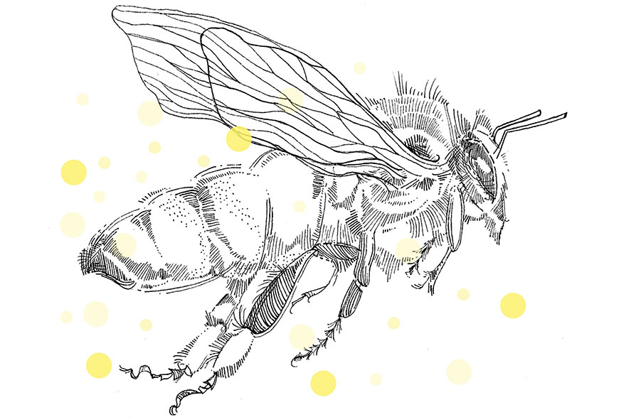 [illustration of a bee]