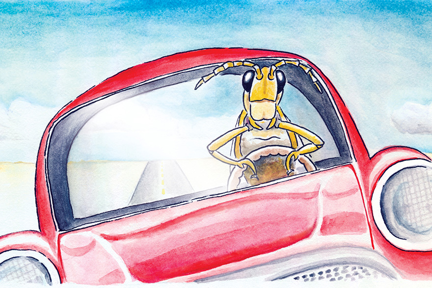 [Illustration of a locust driving a car]