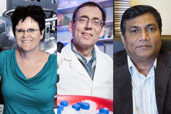 Scholars receive prestigious national chairs