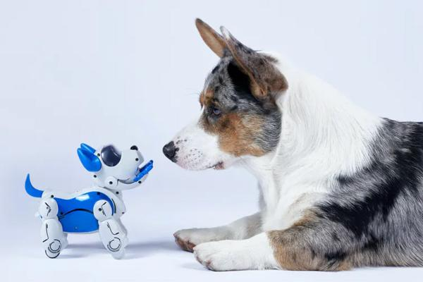Don't try to replace pets with robots – design them to be more like service animals