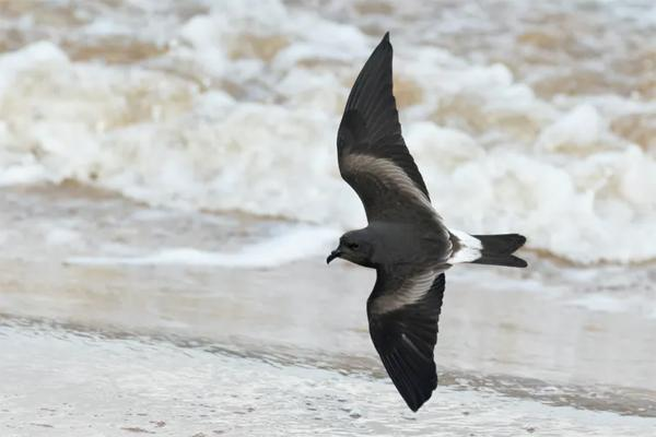 Bird poop and lake mud 'time machine' reveal dramatic seabird declines