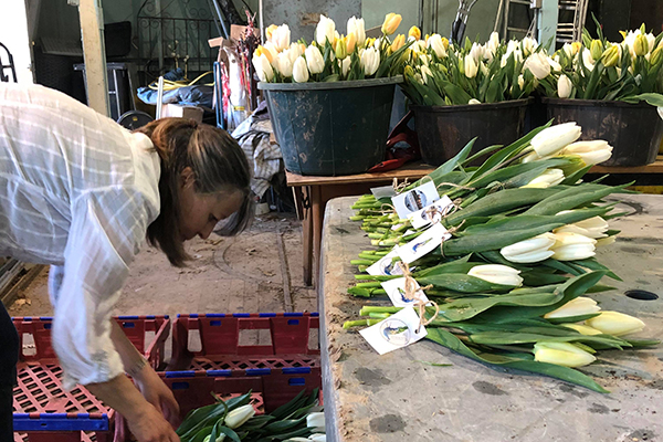 Tulips at the Bader International Study Centre (BISC) were gathered into more than 300 bouquets that were donated to frontline health care workers in the United Kingdom as well as vulnerable members of the local community.