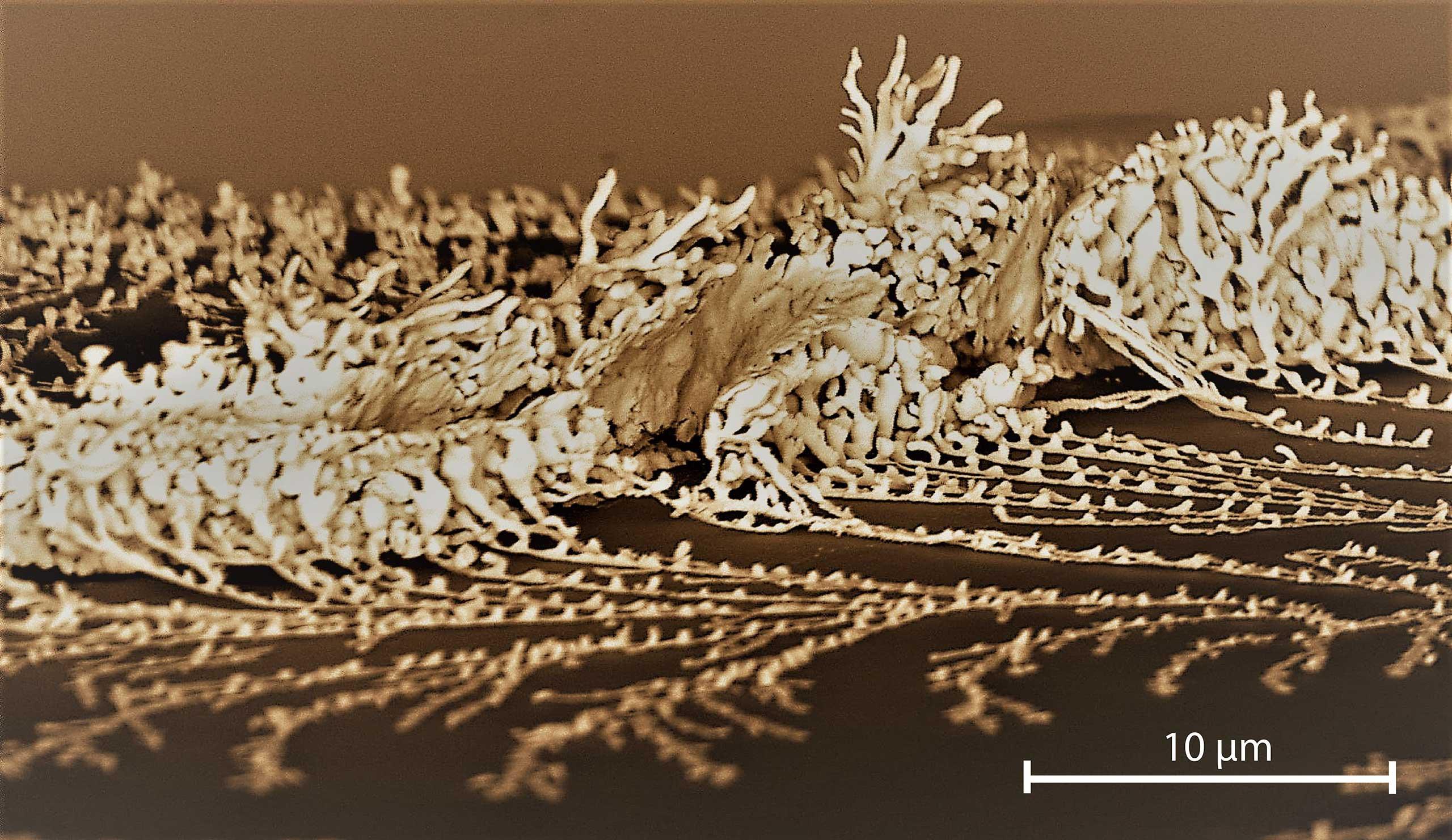 Nano-dendrite Collision