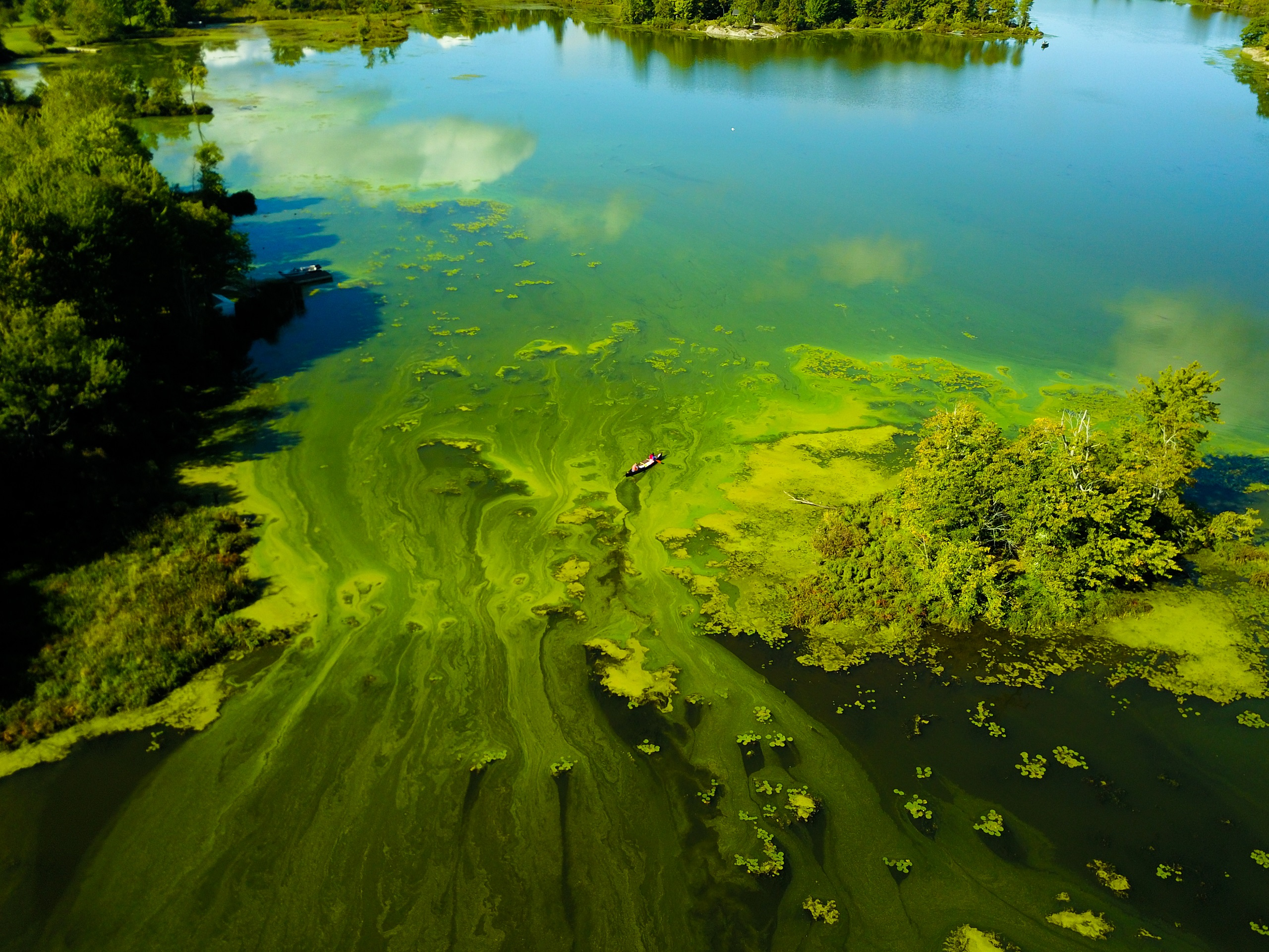 [Aerial photography of algal blooms in South Frontenac County]