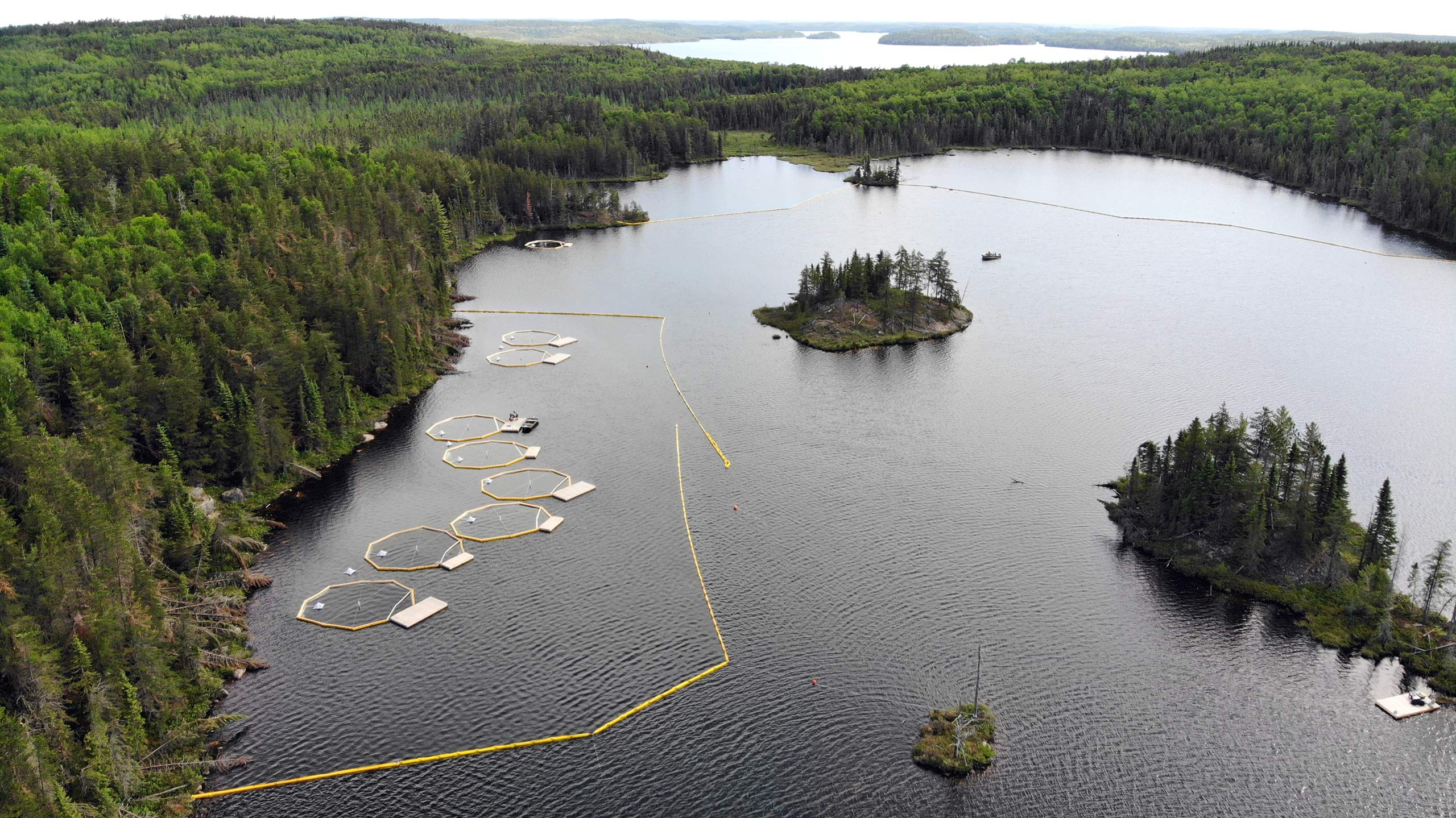 Limnocorrals installed in ELA Lake 260 for the BOREAL study.
