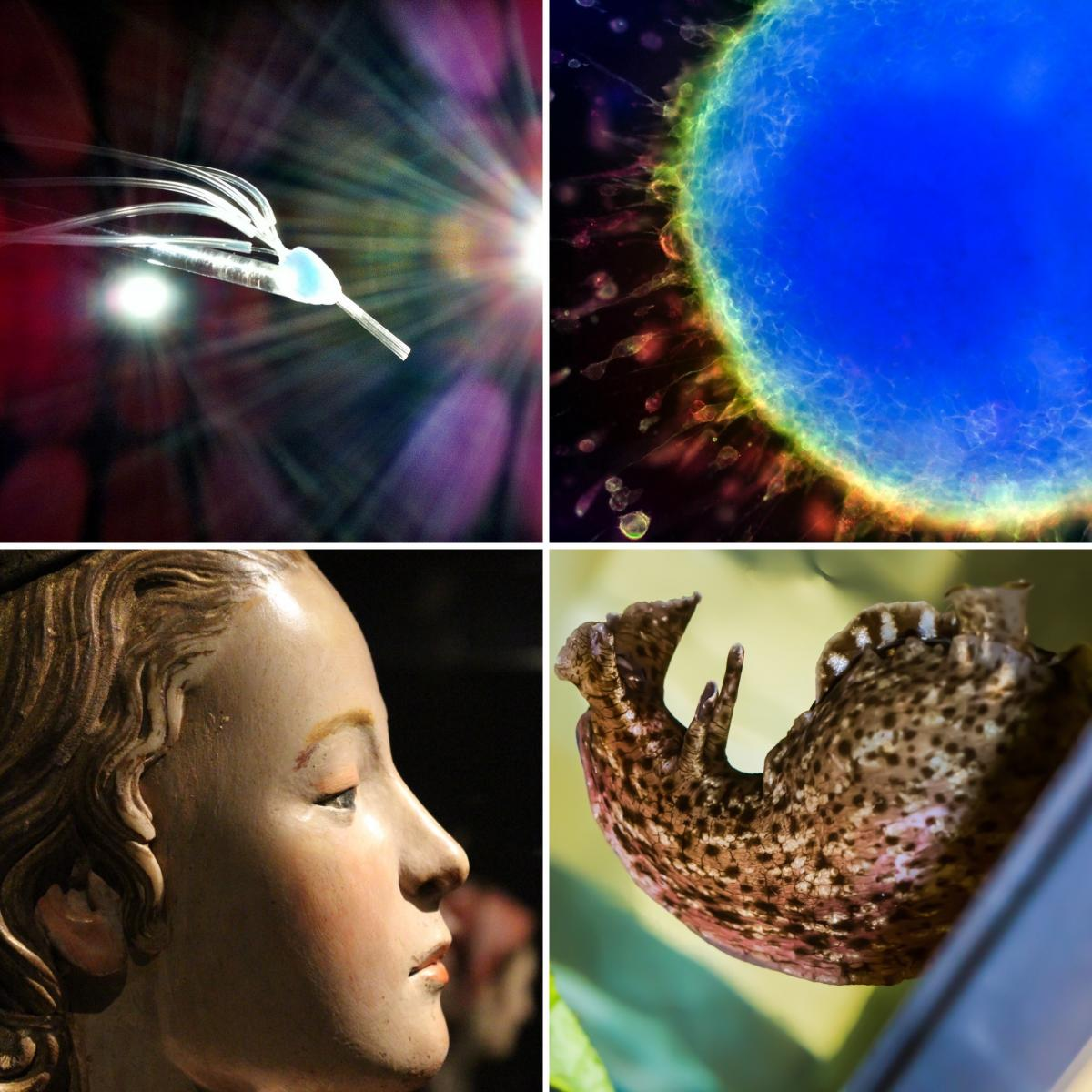 [4 winning images from the 2015 - 2016 Art of Research photo contest]