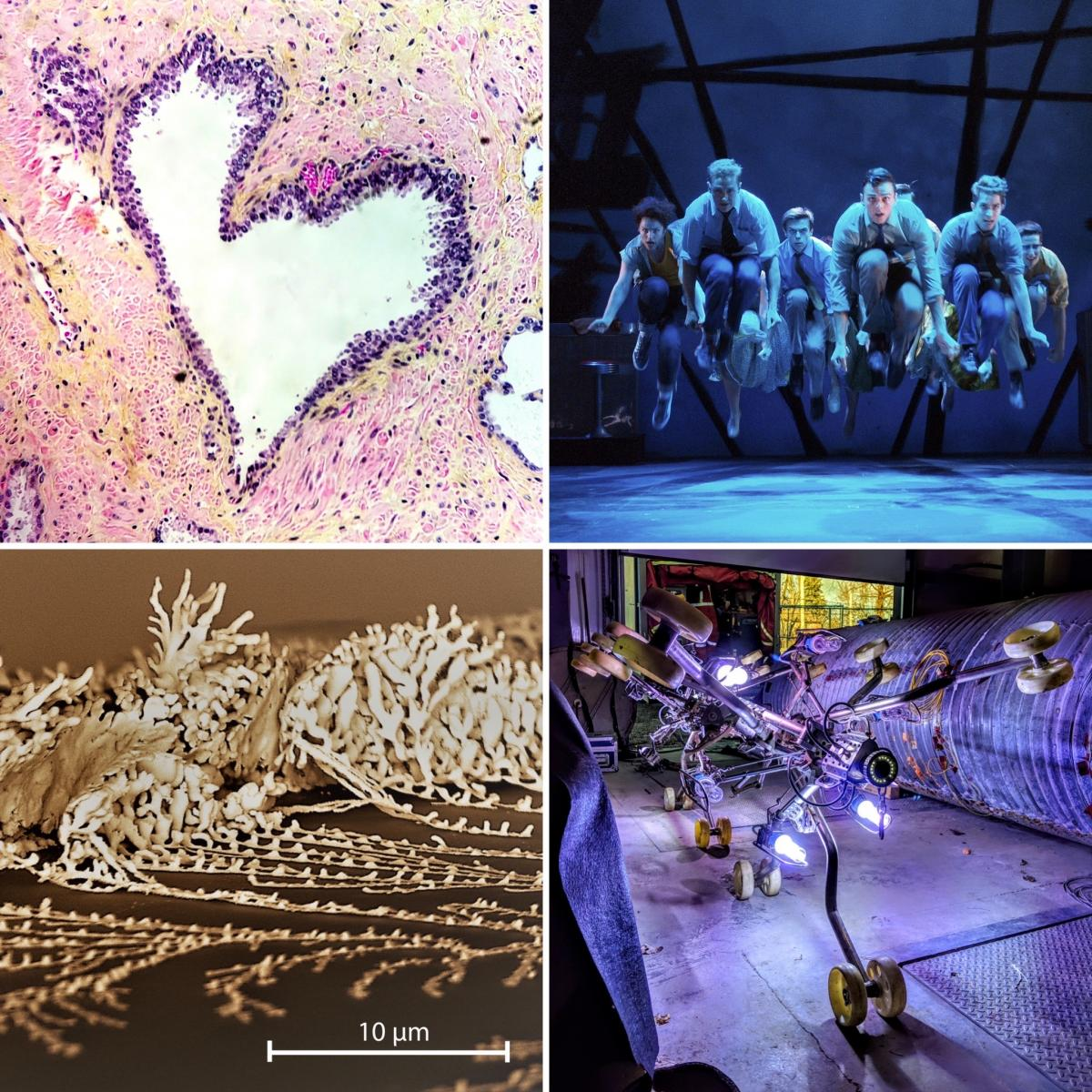 [4 winning images from the 2019 Art of Research photo contest]