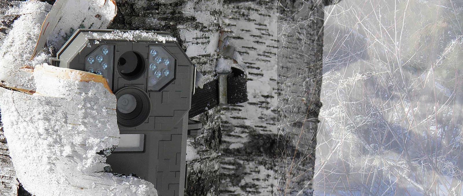 Surveillance camera hidden in a tree