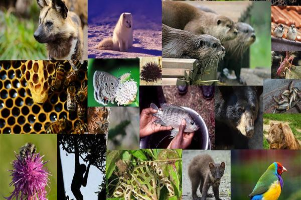 [collage of animals]