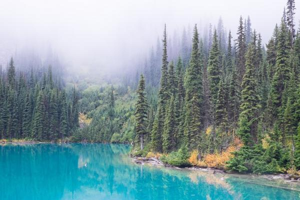 [forest and lake]