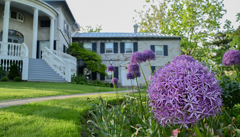 [Alliums in front of Summerhill]