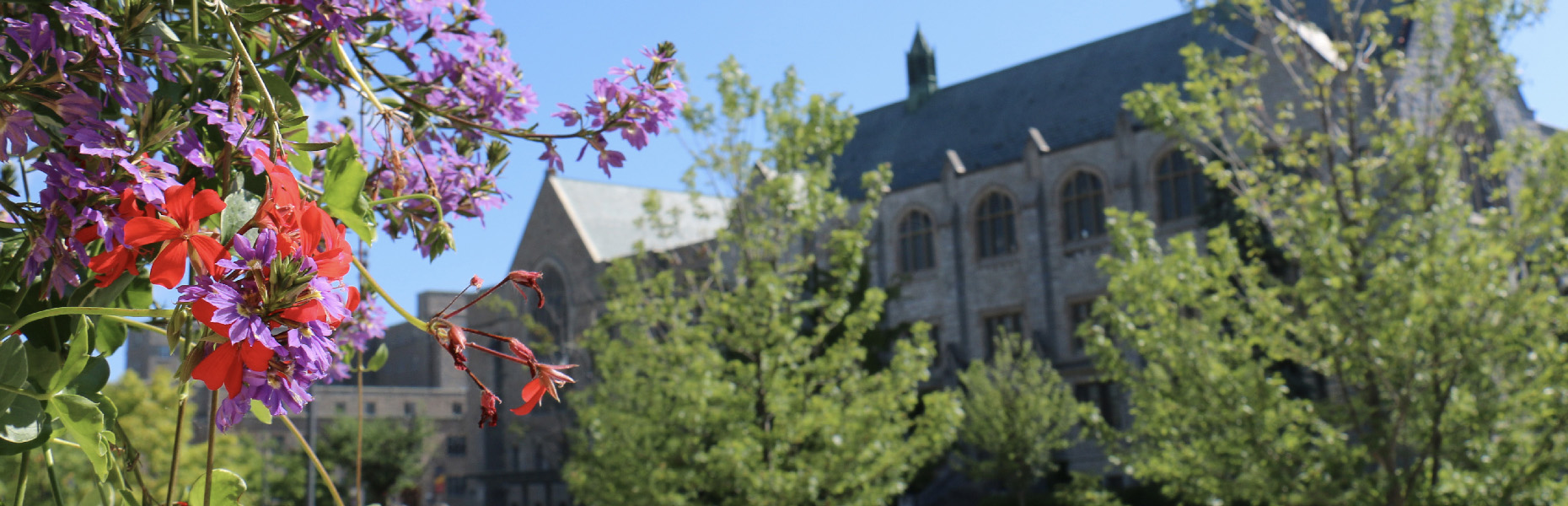 Shot of campus in the summertime.