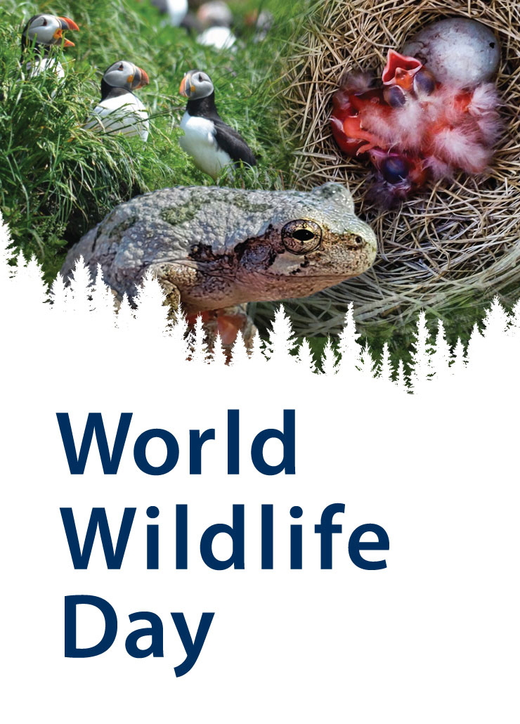 Image of puffins, a frog, and birds in a nest with an overlay of forest trees. Text reads World Wildlife Day.