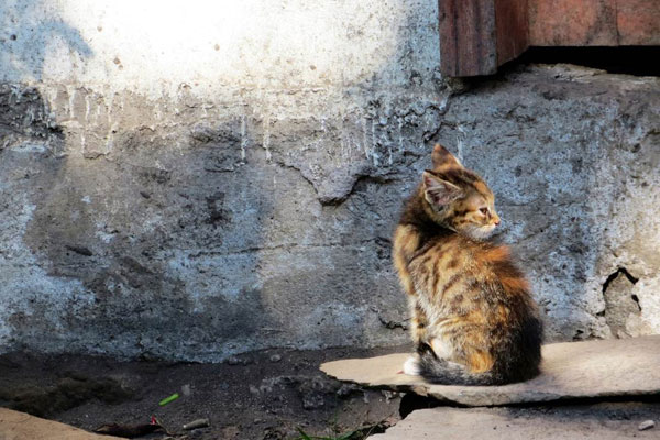 [Stray Cat; Banos, Ecuador. By Nick Graham, 2013.]